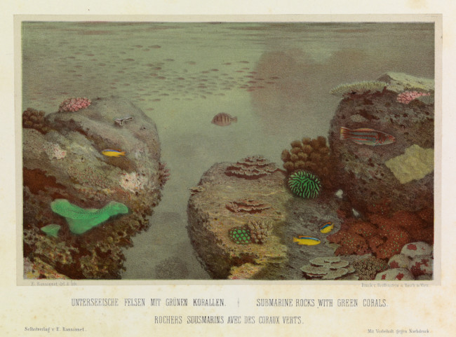 Eugen von Ransonnet-Villez (1838 - 1926) was an Austrian a diplomat, painter, lithographer, biologist and explorer who built a personal submersible and drew what he saw beneath the waves. the sea.